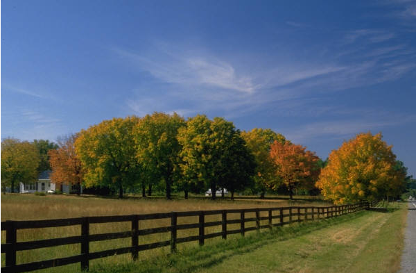 lexington-kentucky-horse-farms