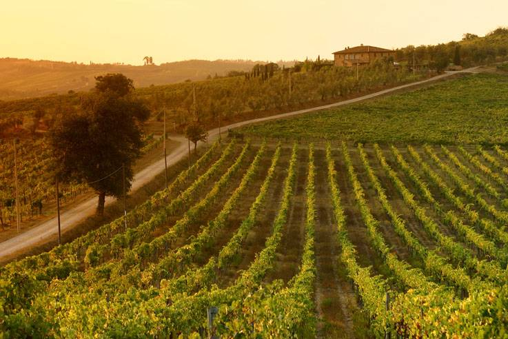 Tuscan_vineyards_at-sunset